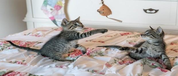 3 ข้อแนะนำในการดูแลสุขภาพแมว