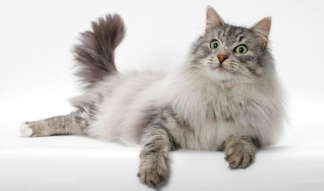 แบบไหนที่เรียกว่าแมวสุขภาพดี?