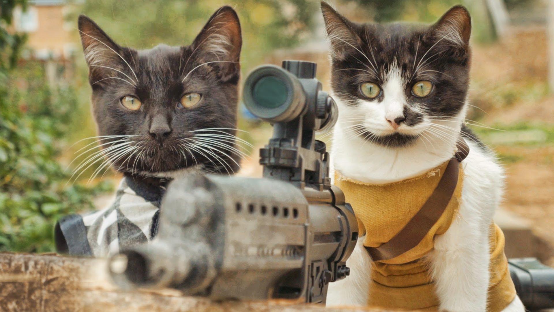จัดไปชุดใหญ่ หนังฟอมยักของน้องแมว