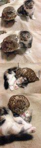 เพื่อนที่แสนดีของน้องแมวเหมี้ยว