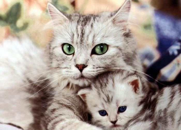 อาหารที่เป็นพิษกับสุขภาพของน้องแมว