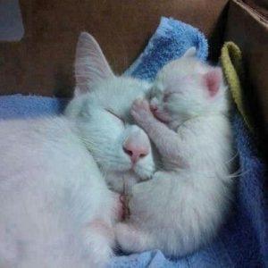 แม่แมวกับลูกแมว.. ดูสิใครจะน่ารักกว่ากัน