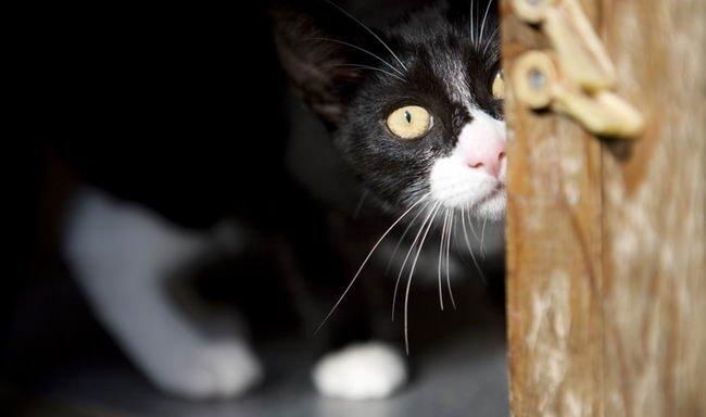 7 จุดอ่อนของแมวกับสิ่งของธรรมดา..แต่ดันน่ากลัวสำหรับพวกมันซะงั้น