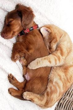 หมากับแมวก็เพื่อนกัน