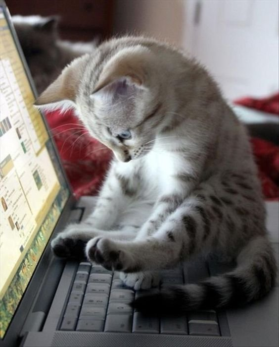 สิ่งที่ยืนยันว่า 'แมว' เกิดมาพร้อมพลังงานลี้ลับบางอย่างเพื่อสะกดจิตมนุษย์