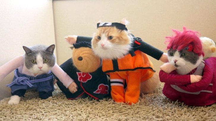 Nekoya คาเฟ่แมวสุดมุ้งมิ้ง ที่คนรักแมวไม่ควรพลาด!