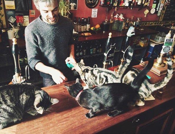 บางคนชอบแมว บางคนชอบเบียร์ ร้านนี้เลยเอาสองอย่างมารวมกันซะเลย น่านั่งแถมยังน่ารักอีกด้วย