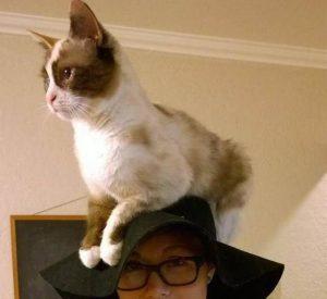 ทำไมแมวชอบมานั่งบนหัว ทั้งเวลานั่งและเวลานอน..เพราะอะไรกันนะ ?