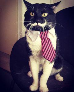 เจ้าแมวมาดเข็ม Dali เห็นเข็มๆแต่เป็นแมวนิสัยดีนะ น่ารักด้วย