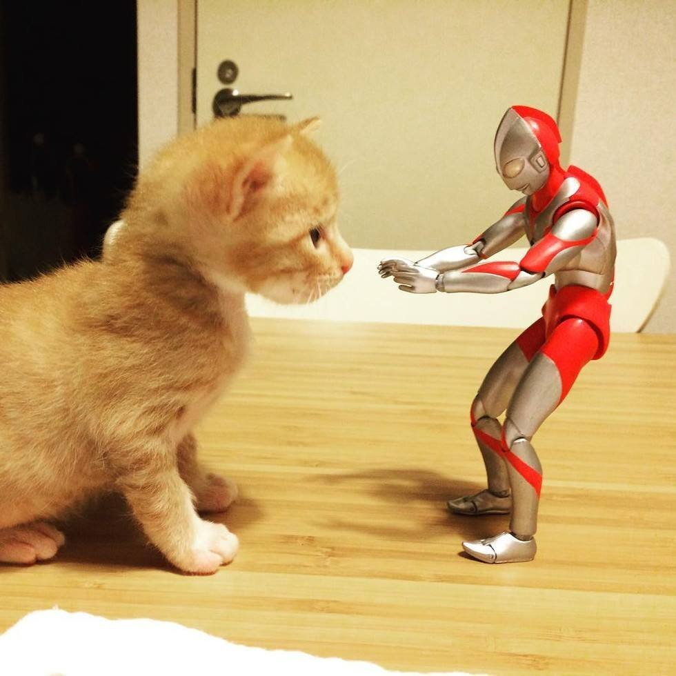 แมวน้อยกับเจ้าอุลตร้าแมนสุดแสนจะน่ารัก