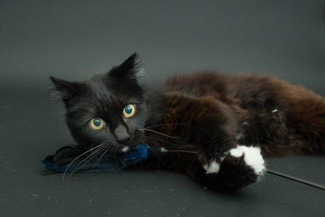 แมวดำ เป็นสัตว์ที่ถูกรับเลี้ยงเป็นอันดับสุดท้าย เพราะหลายๆ คนมองว่าเป็นสัตว์ โชคร้าย