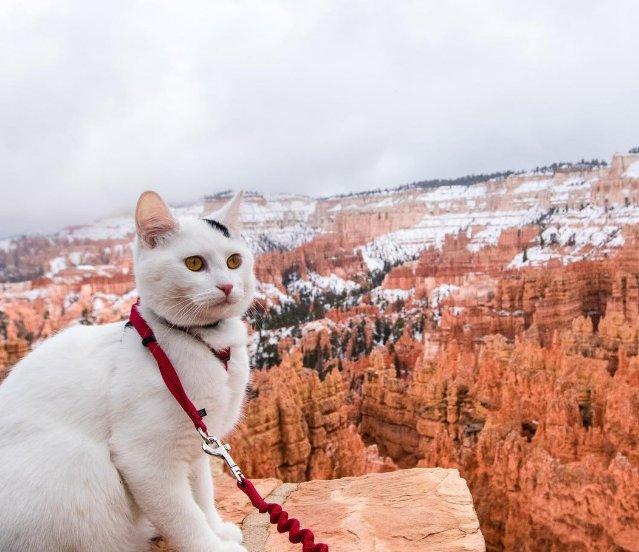 ชีวิตการผจญภัยของแมวน้อย Vladimir ที่ดูแล้วต้องยิ้มตาม