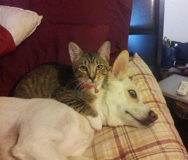 มนุษย์หวังให้หมากับแมวเป็นเพื่อนที่ดีต่อกัน แต่ความจริง?