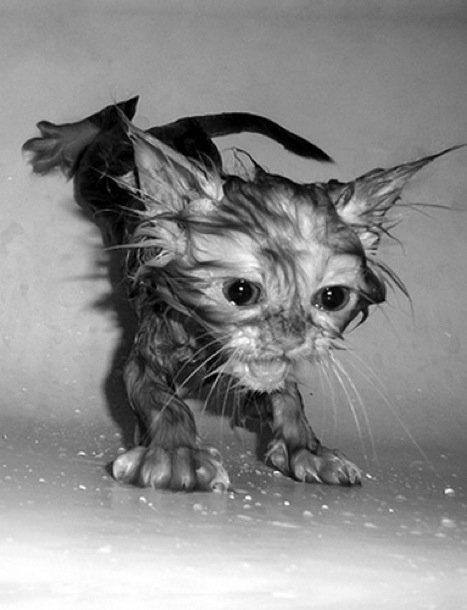 รวมภาพเจ้าแมวน้อยเปียกน้ำสุดฮา บวกกับความน่ารัก