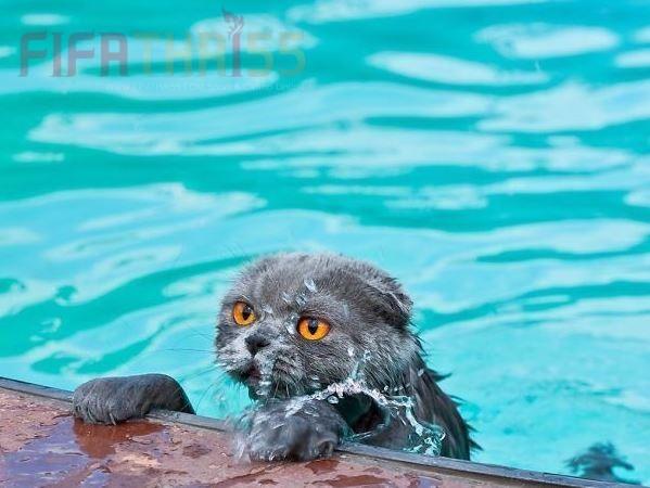 ทำไมน้องแมวเหมียวถึงกลัวน้ำ !! ไปดุสาเหตุพร้อมๆกันเลย