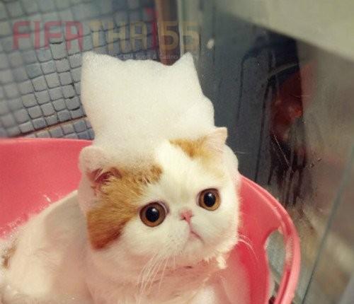 เทคนิคง่ายๆ กับการอาบน้ำน้องแมว