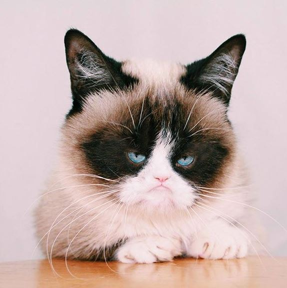 ฮือฮา พบแมวสายพันธุ์ หน้าเล็ก เพาะพันธุ์ง่ายๆ ด้วยโฟโต้ช็อป