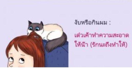 วันนี้จะพามารู้จักภาษาแมว ภาษาแมวไม่ได้ยากอย่างที่คิดเลย