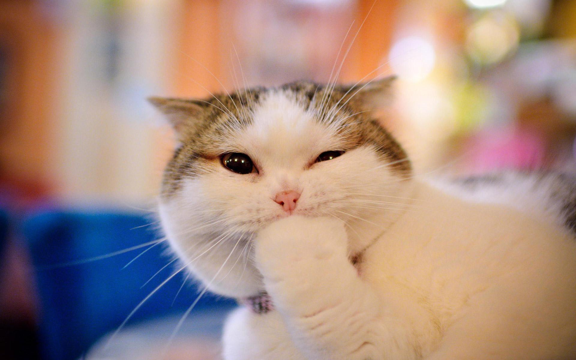 สาระน่ารู้ เกี่ยวกับการดูแลสุขภาพน้องแมวที่คุณอาจจะยังไม่รู้
