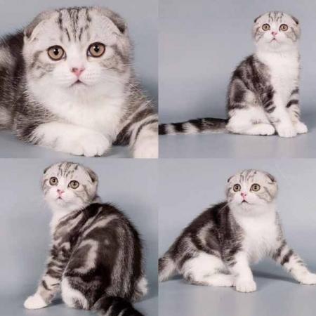 นิสัยและลักษณะเฉพาะของแมว