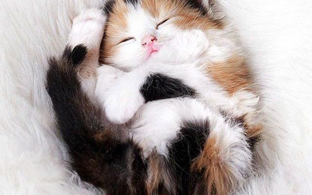 เกร็ดความรู้สำหรับทาสแมว มือใหม่หัดเลี้ยงน้องแมวเบื้องต้น