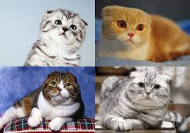 อายุขัยของแมว