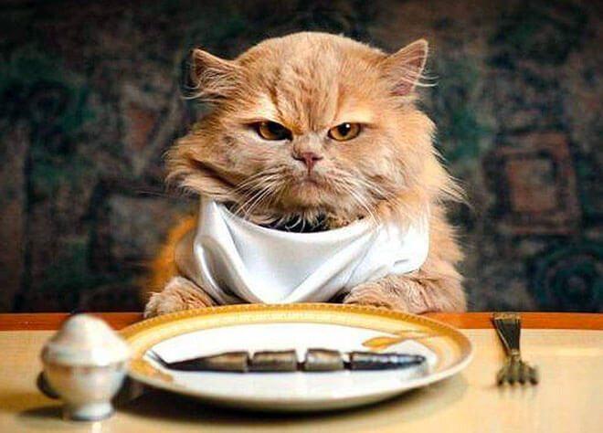 เรื่องค่าใช้จ่ายในการเลี้ยงและดูแลแมว