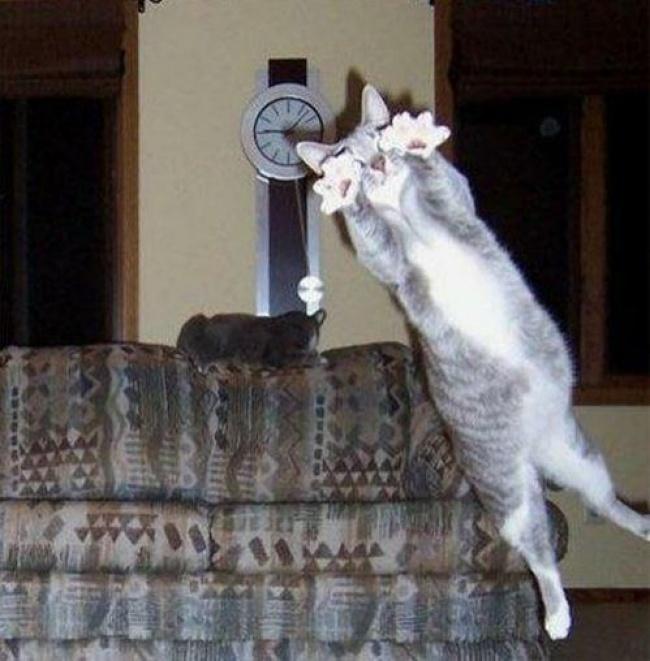 รวมภาพความน่ารักของน้องแมวที่ทาสแมวต้องตกหลุมรักชุ่มฉ่ำหัวใจ