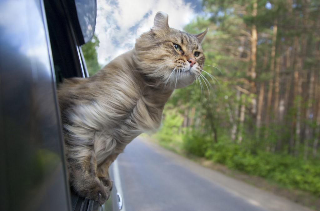 อยากเป็นทาสแมว ต้องปฏิบัติการใช้ชีวิตกับน้องอย่างไร