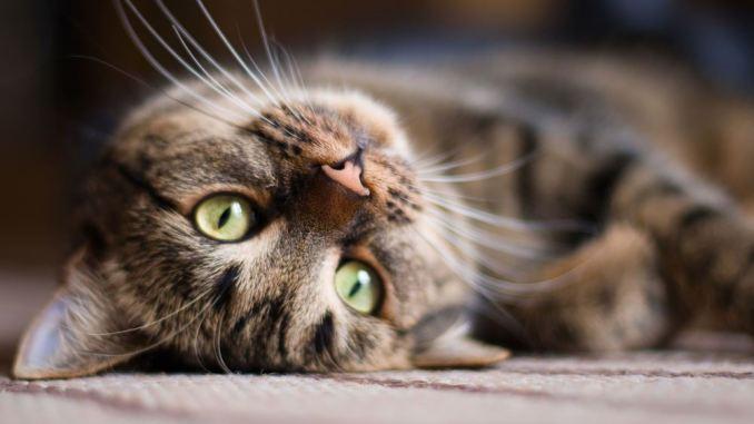 จริงหรือไม่! แมวกลัวแตงกวา ปริศนาคำถาม วันนี้เรามีคำตอบ
