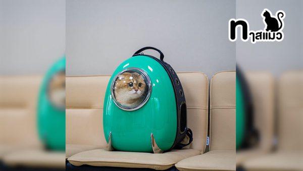 ภาพสุดฮา! สำหรับทาสแมว ตัดต่อสุดเก๋เจ้าเหมียวตะลุยอวกาศ