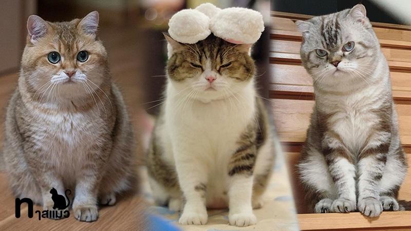 ชื่อแมวสุดฮิต น่ารัก น่าฟัด จนทาสเห็นแล้วใจต้องละลาย!