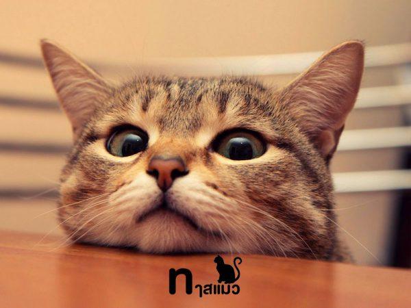 เหตุผลที่แมวชอบปลุกเราตอนดึก